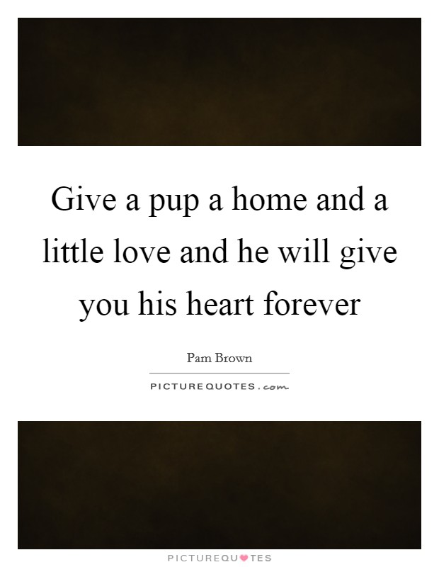 Give a pup a home and a little love and he will give you his heart forever Picture Quote #1