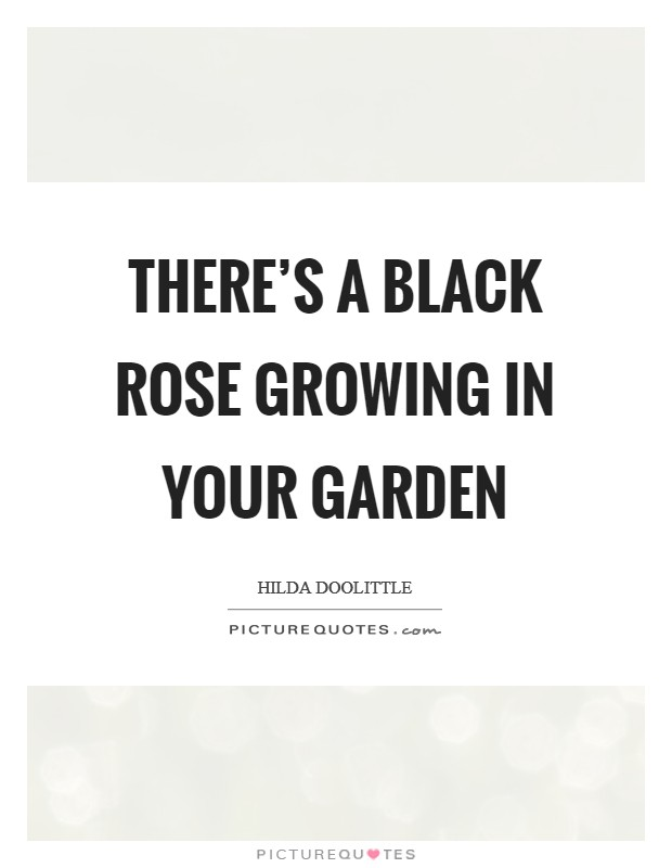 There's a black rose growing in your garden Picture Quote #1