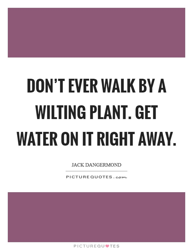 Don't ever walk by a wilting plant. Get water on it right away Picture Quote #1