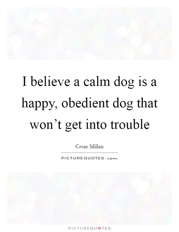 I believe a calm dog is a happy, obedient dog that won't get into trouble Picture Quote #1