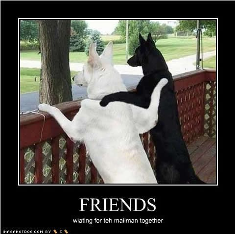 Cute Animal Friendship Quote 1 Picture Quote #1