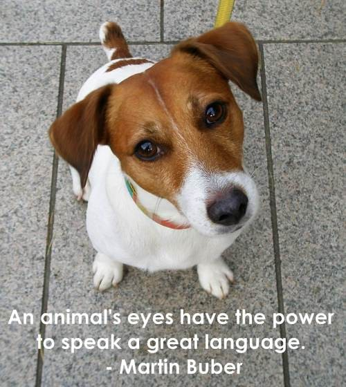 Cute Animal Quote 3 Picture Quote #1