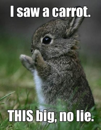 Cute Animal Quote 7 Picture Quote #1