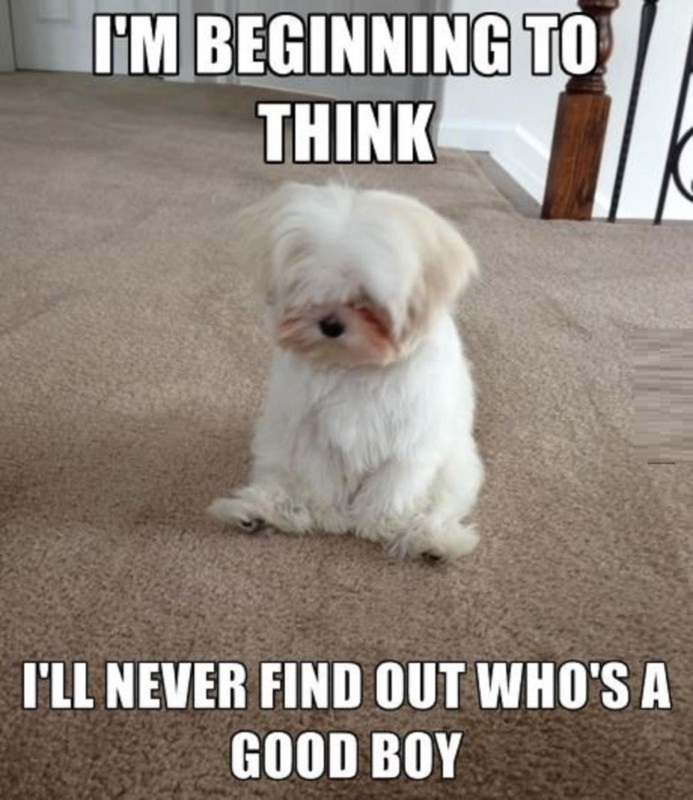 Cute Animal Quote 8 Picture Quote #1