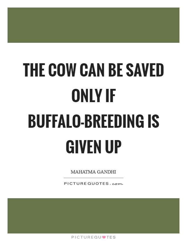 The cow can be saved only if buffalo-breeding is given up Picture Quote #1