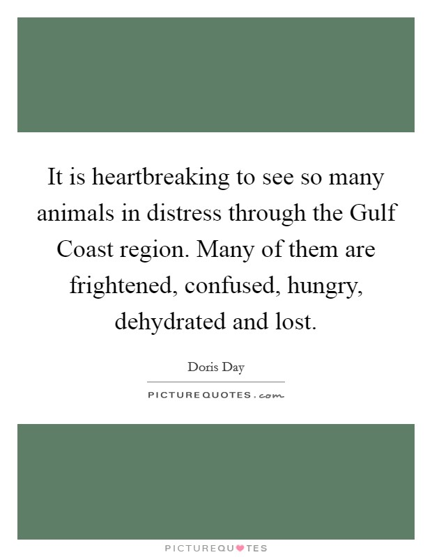 It is heartbreaking to see so many animals in distress through the Gulf Coast region. Many of them are frightened, confused, hungry, dehydrated and lost Picture Quote #1