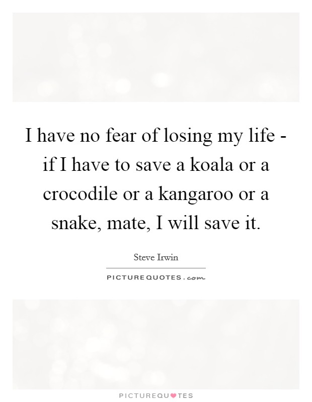 I have no fear of losing my life - if I have to save a koala or a crocodile or a kangaroo or a snake, mate, I will save it Picture Quote #1