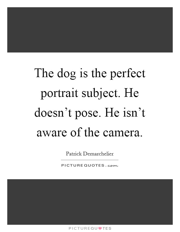 The dog is the perfect portrait subject. He doesn't pose. He isn't aware of the camera Picture Quote #1