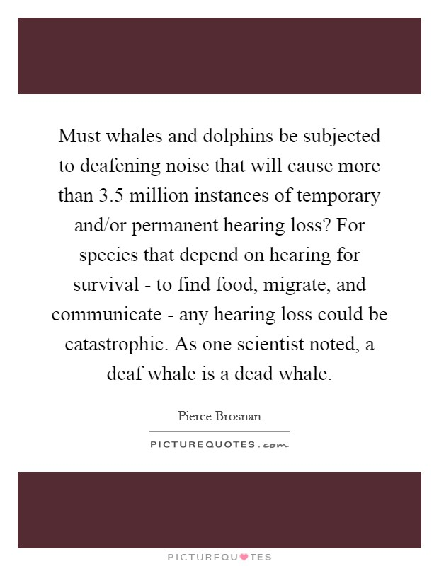 Must whales and dolphins be subjected to deafening noise that will cause more than 3.5 million instances of temporary and/or permanent hearing loss? For species that depend on hearing for survival - to find food, migrate, and communicate - any hearing loss could be catastrophic. As one scientist noted, a deaf whale is a dead whale Picture Quote #1