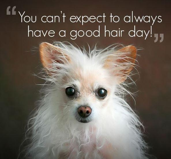 Funny Hair Quotes You can't always have a good hair day | Picture Quotes Funny Hair Quotes